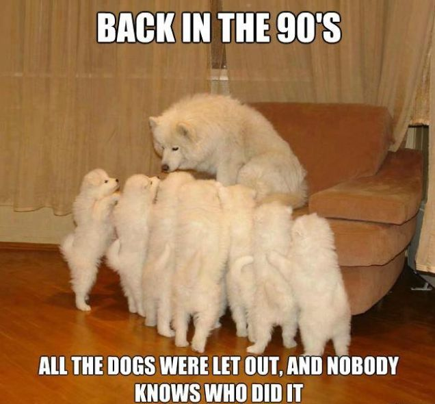 Pet Meme back in the 90's all the dogs were