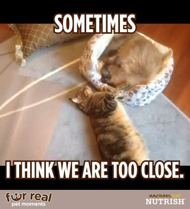 Pet Meme sometimes i think we are too close