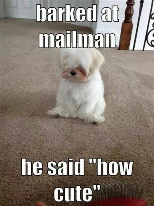 Pet Memes Barked at mailman he said how cute
