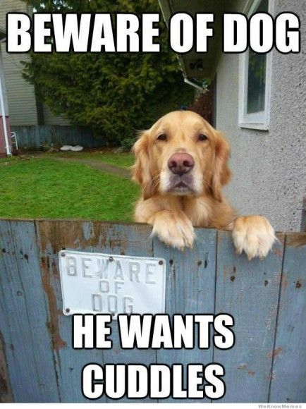 Pet Memes Beware of dog he wants cuddles