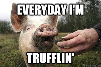 Pigs Memes Everyday I'm trufflin