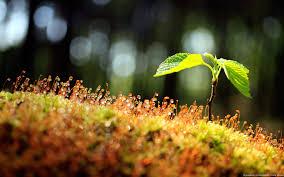 Plant A Tree Save Tree Happy Arbor Day Wallpaper