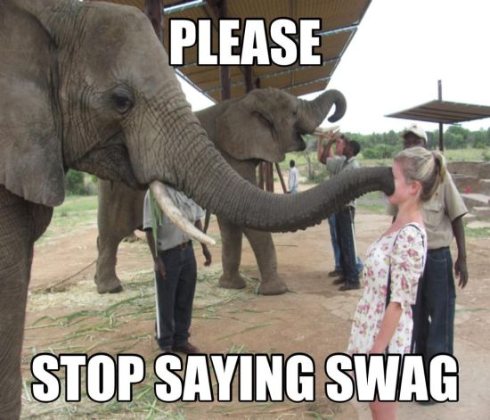 Please stop saying swag Stop Memes