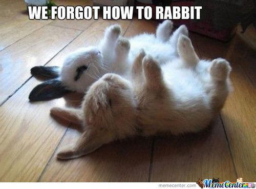 Rabbit Meme We forgot how to rabbit
