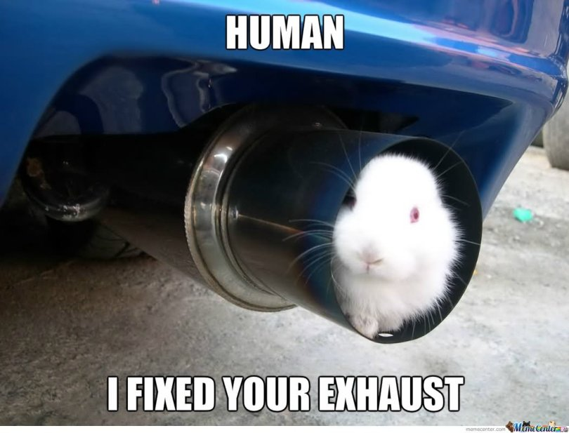 Rabbit Memes Human i fixed your exhaust