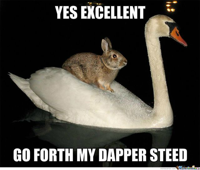 Rabbit Memes Yes excellent go forth my dapper steed
