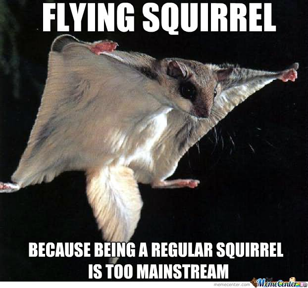 Squirrel Meme Flying Squirrel because being