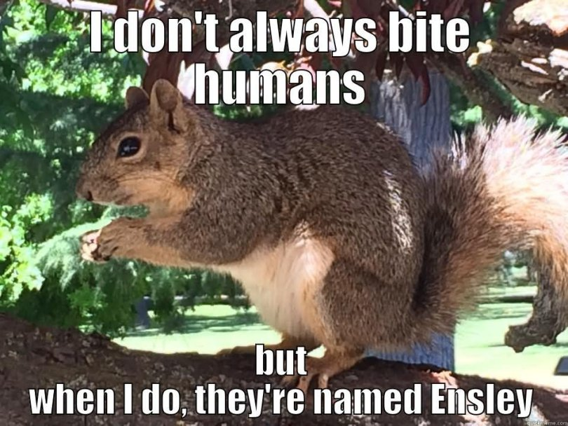 Squirrel Meme I don't always bite humans but when i do
