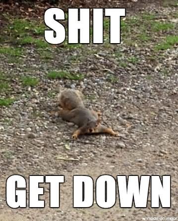 Squirrel Meme Shit get down