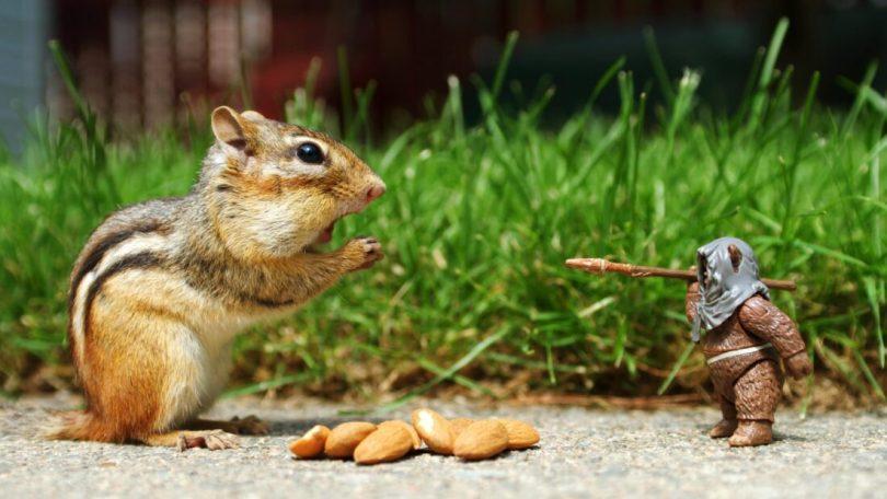 Squirrel Meme Funny