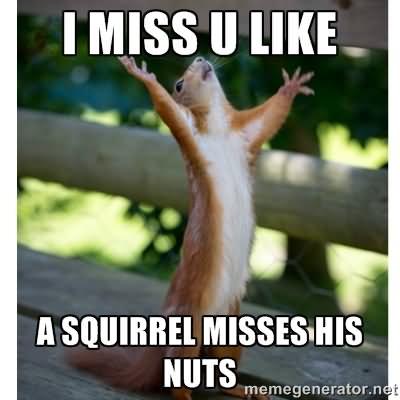 Squirrel Memes I miss u like a squirrel misses