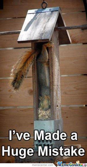 Squirrel Memes I ve made a huge mistake