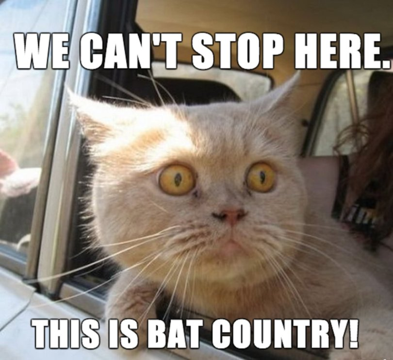 Stop Memes We can't stop here this is bat country