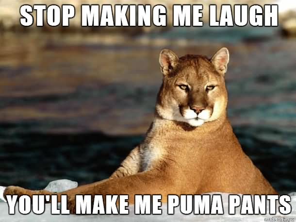 Stop making me laugh you'll make me puma pants Meme
