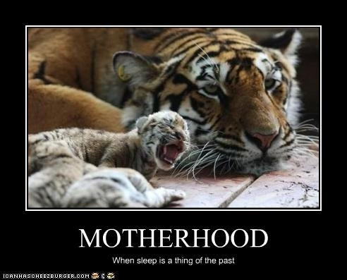 Tiger Meme Motherhood when sleep is a thing of the past