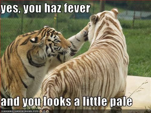 Tiger Meme Yes you haz fever and you looks a little pale