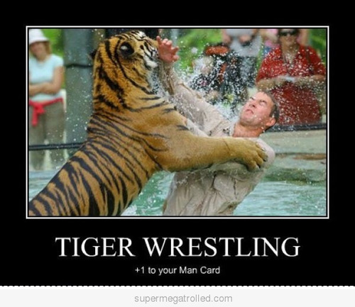 Tiger wrestling 1 t your man card Tiger Meme