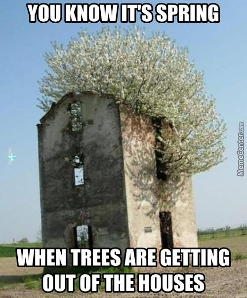 Tree Memes You know it's spring when trees are getting out of the houses