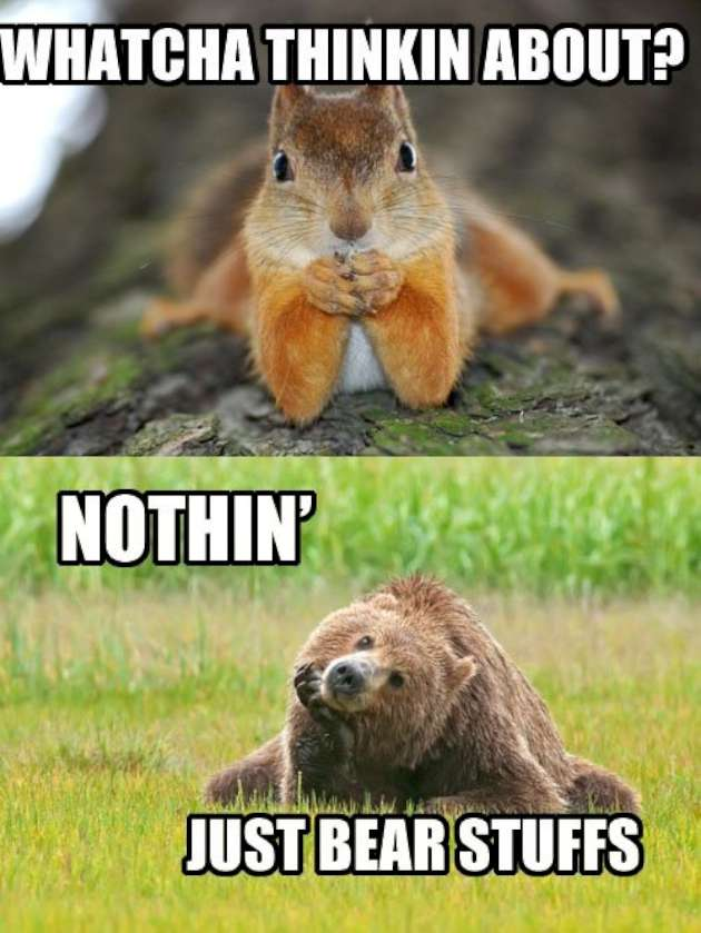 Whatcha thinkin about nothin just bear stuffs Squirrel Meme
