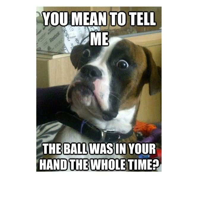 You mean to tell me the ball was in your hand the whole time Pet Meme