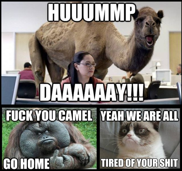 Hummmp daaaaaaay fuck you camel go home Hump Day Meme Dirty
