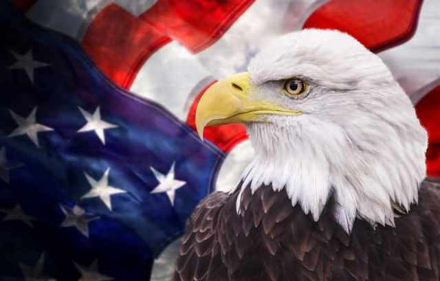 American Eagle Day Best Hd Images