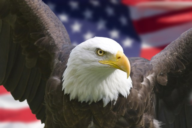 American Eagle Day Have A Great Day