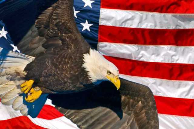 Best American Eagle Day Wishes Wallpaper