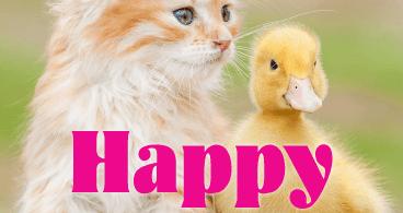 Cute Friend Birthday Card Wishes 03
