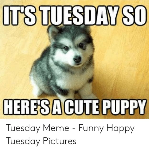 25 Happy Tuesday Meme Funny Images & Jokes - Picss Mine