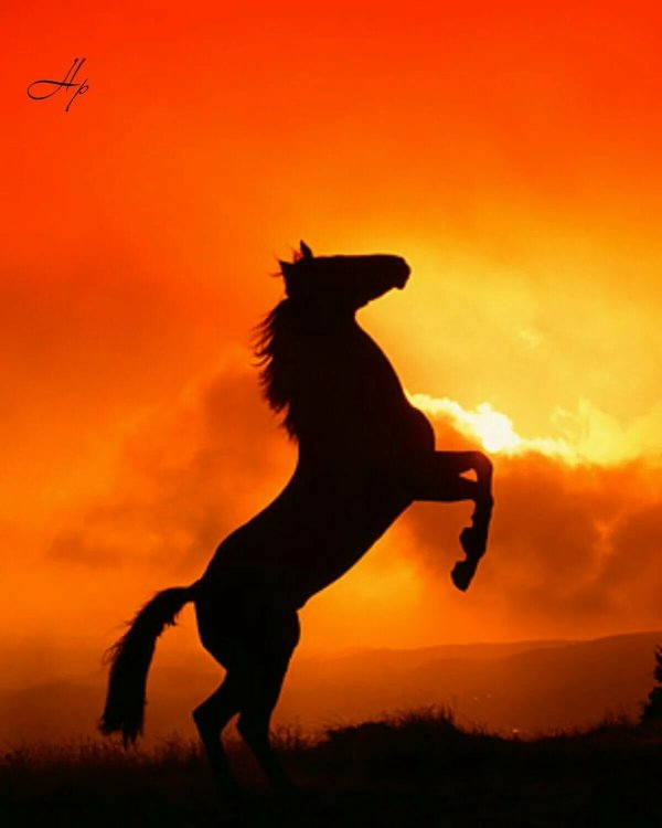 Черный конь на закате: фото, изображения и картинки