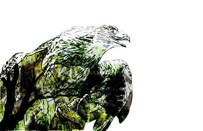 Povestea unui vultur care se credea găină