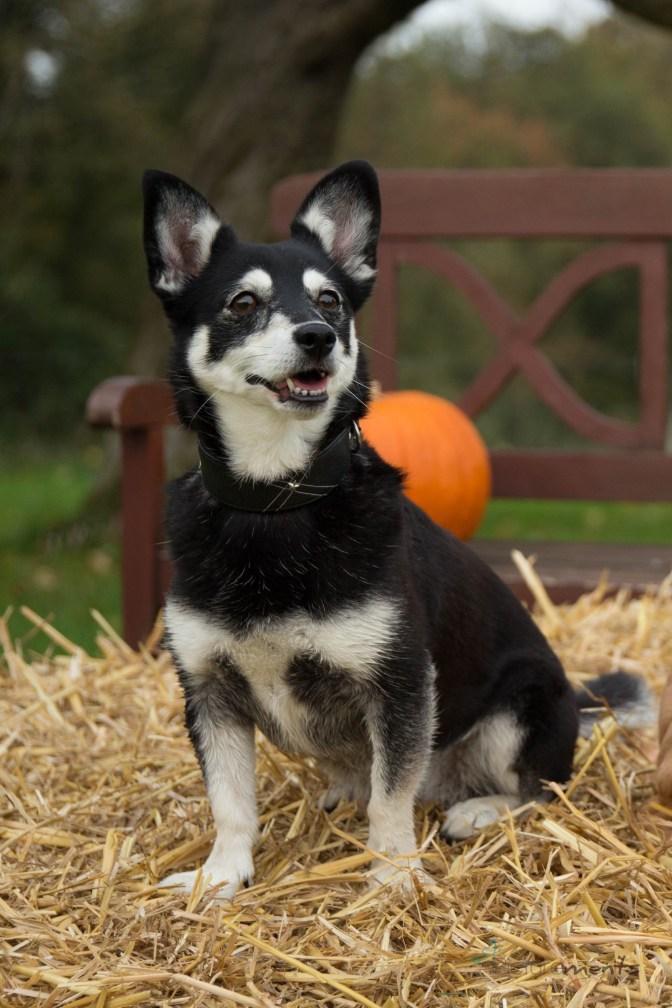 Herbsthunde - Fotoshooting auf Gut Haasbach