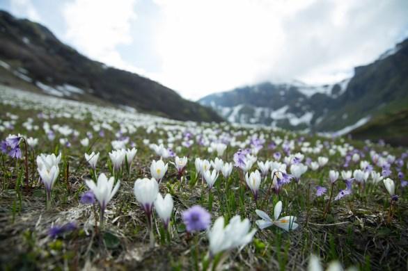 Frühling auf 2000m - Zwischen Mürren und Gimmelwald