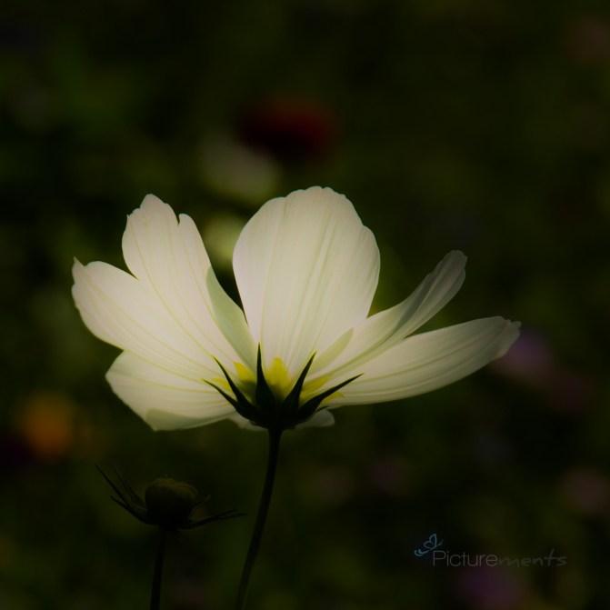 IMG_6366-21