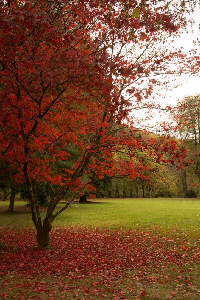 colourful autumn @ Bergisches Land