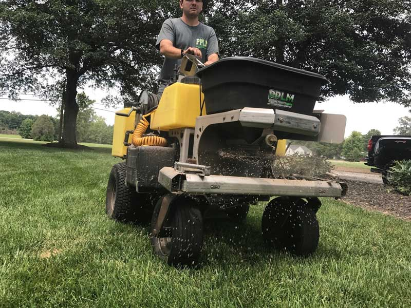 How to Take Care of Your Newly Seeded Fescue Lawn after Aeration and Seeding