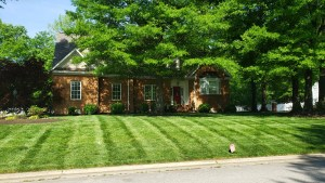 Colonial Heights Lawn Care