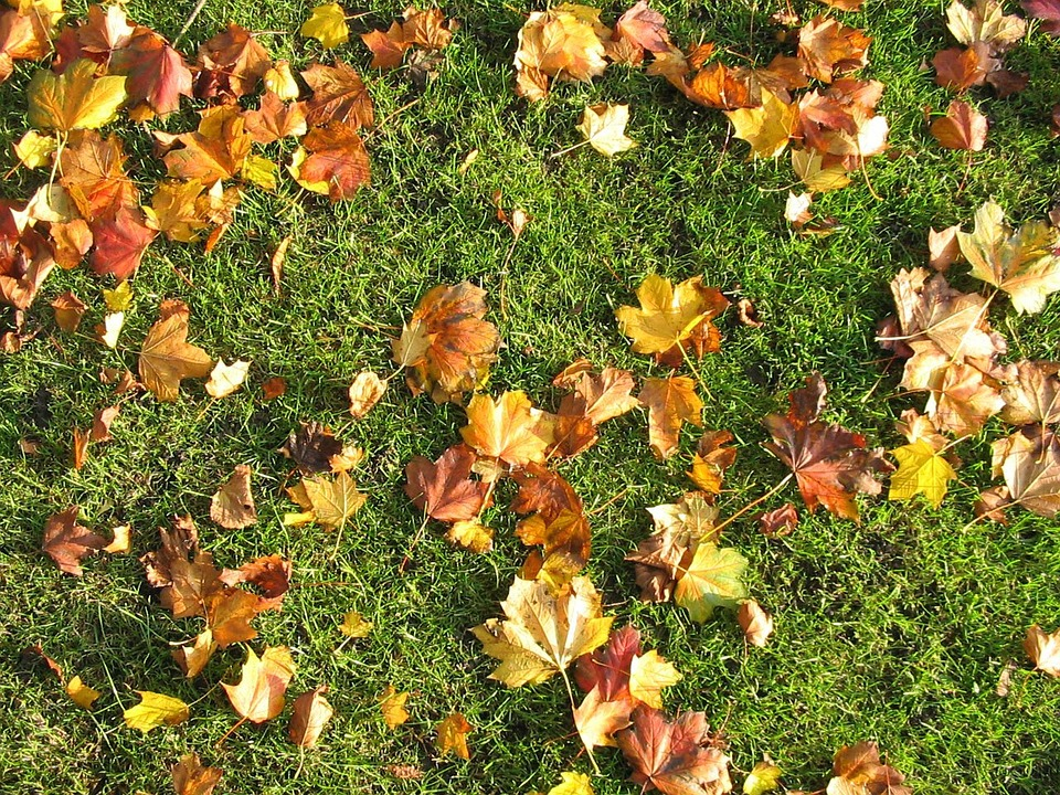 Is Mulching Leaves Bad for Grass Seedlings?