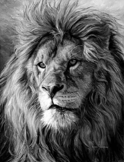 Lion Drawings Poc