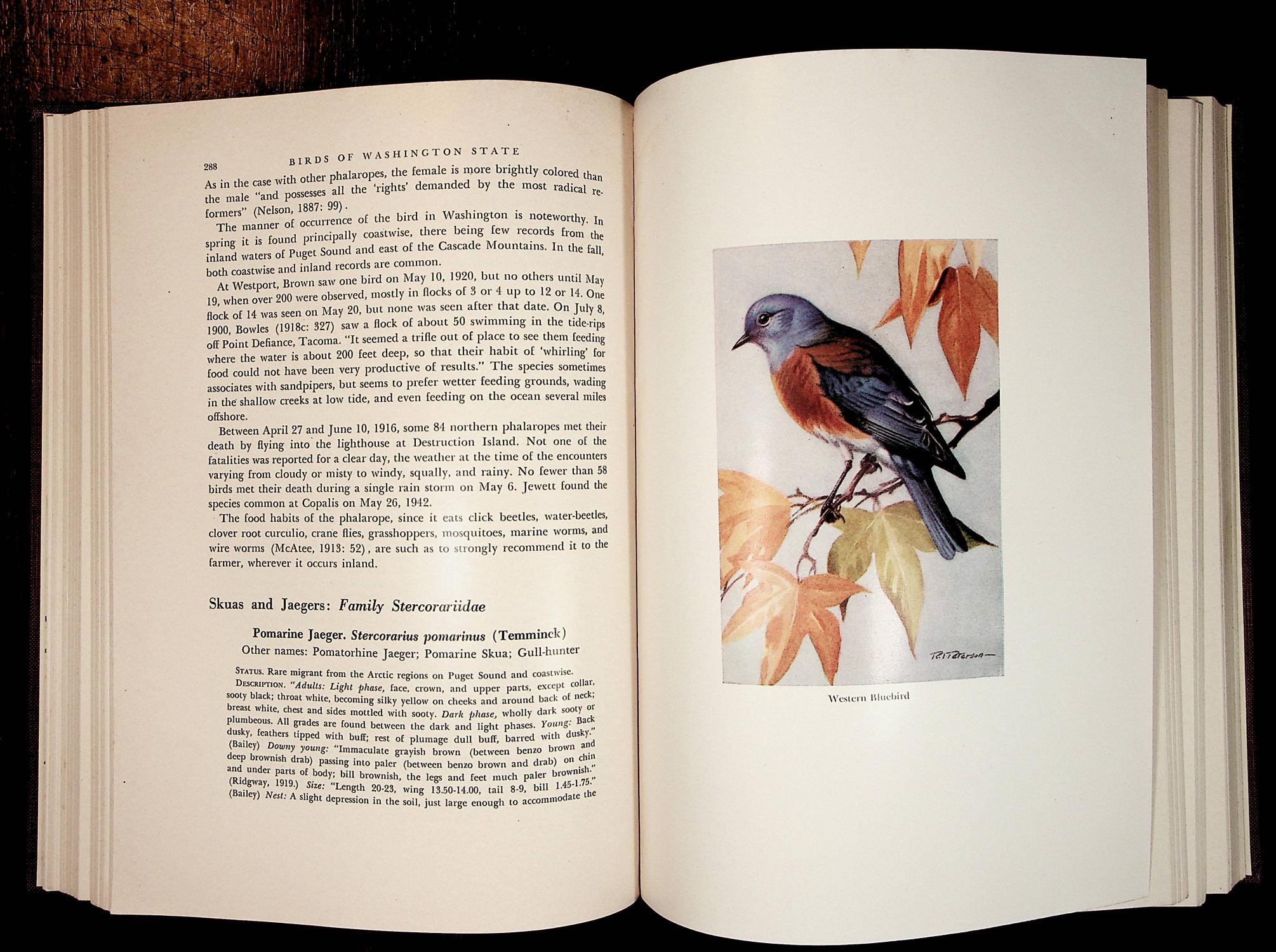 Birds Of Washington State By Jewett Stanley And Taylor