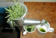 wheat grass juicing Photo by Duk http://commons.wikimedia.org/wiki/File:WheatGrassJuicing.jpg