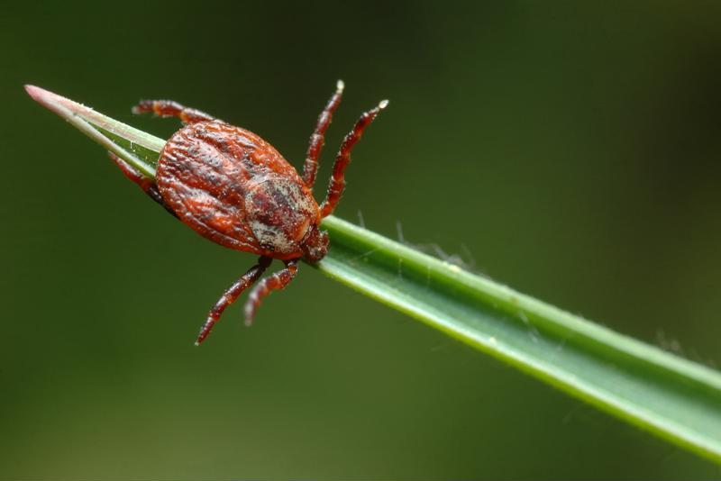 Ticks pack a big bite in a small package.