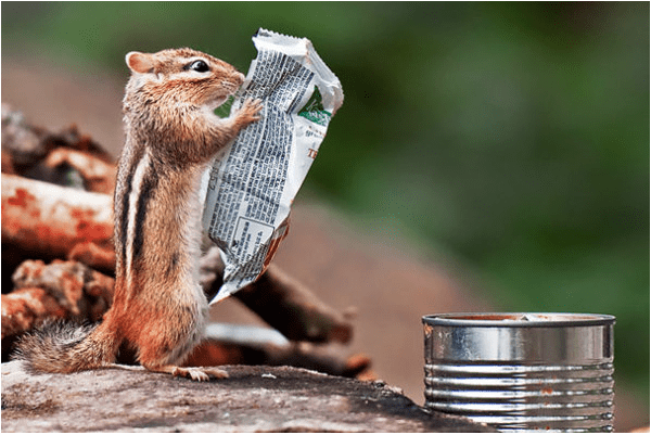squirrel reading newspaper