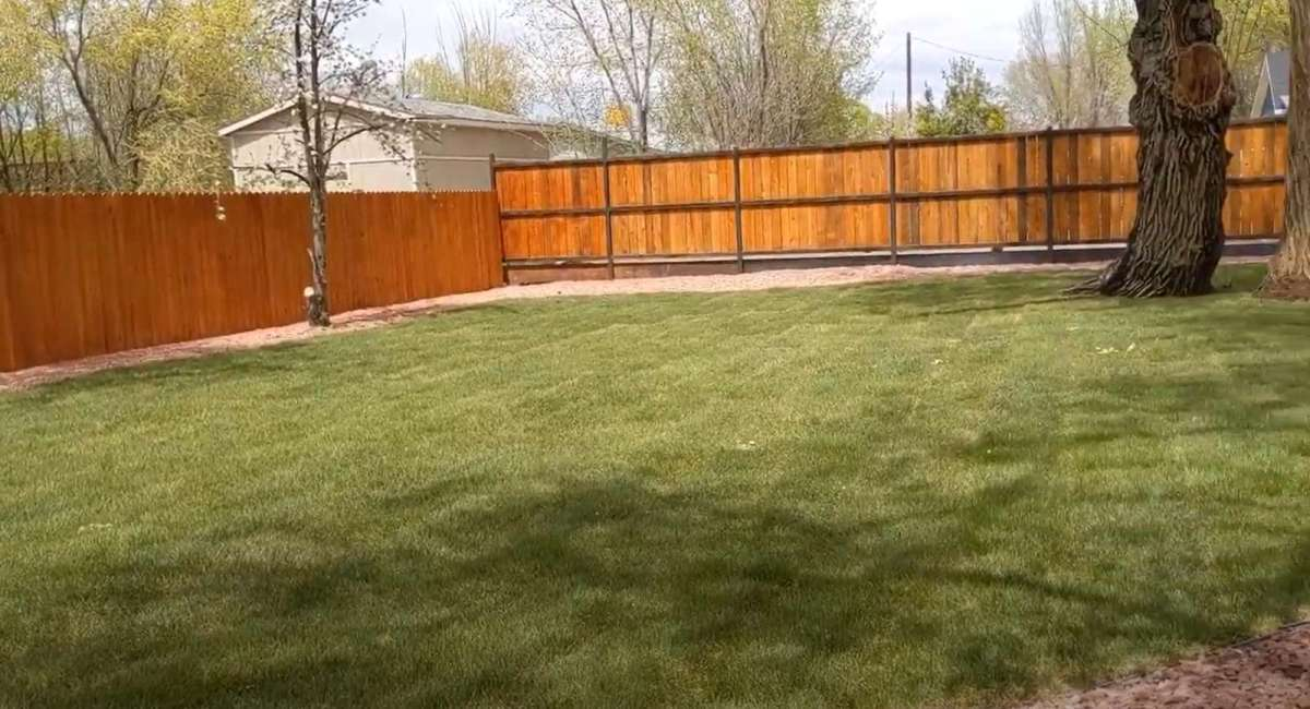 Big green backyard for your furry friends to have a blast!