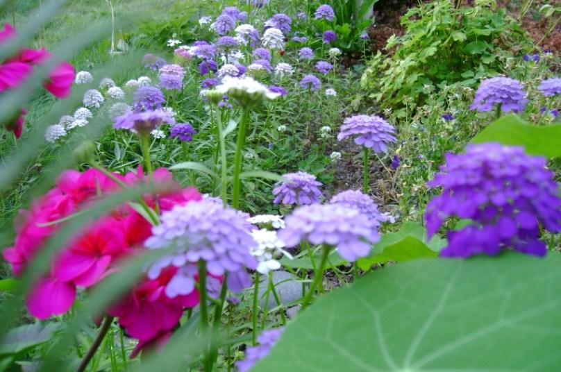 fairy-tale-garden