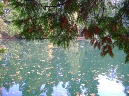 leaves autumn water