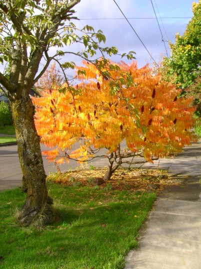 leaves entire tree