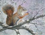 Squirrel 9x11 Canvas