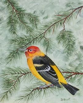 Western Tanager 10x8 Canvas